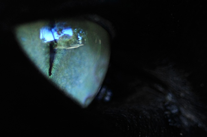 The world in a cat's eye.