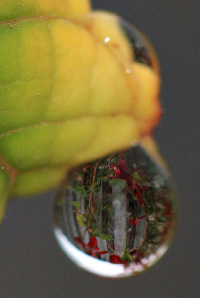 Getting the rest of the garden trapped inside a water drop is tricky!