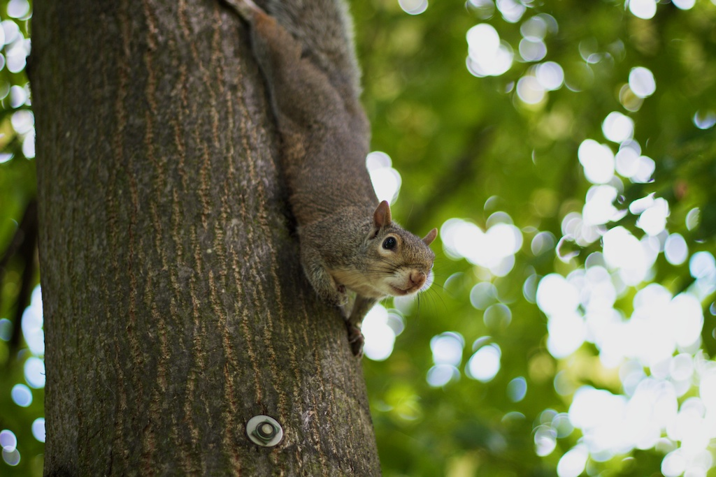 National Squirrel Appreciation Day | David Robertson