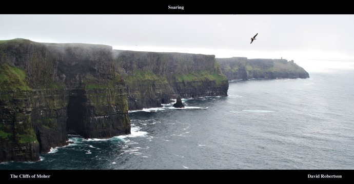 A seabird soaring at the Cliffs of Moher, Galway.