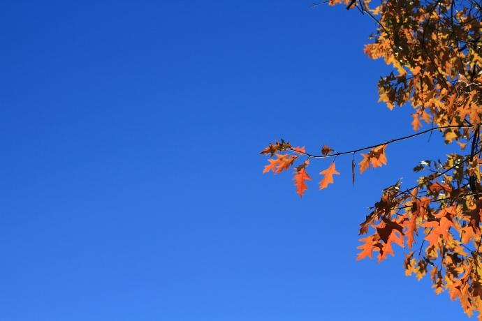 Autumn120103