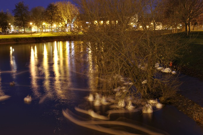 Slow shutter swans.